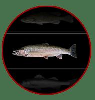 FISH SPECIES SELECTOR