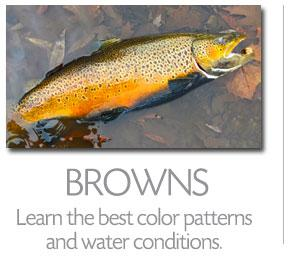 FISHING APP - BROWN TROUT FISHING