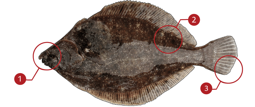 How to Identify a Rock Sole