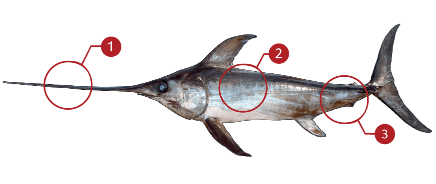 How to Identify an Swordfish