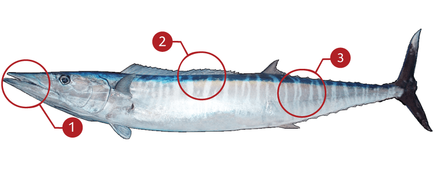 How to Identify a Wahoo